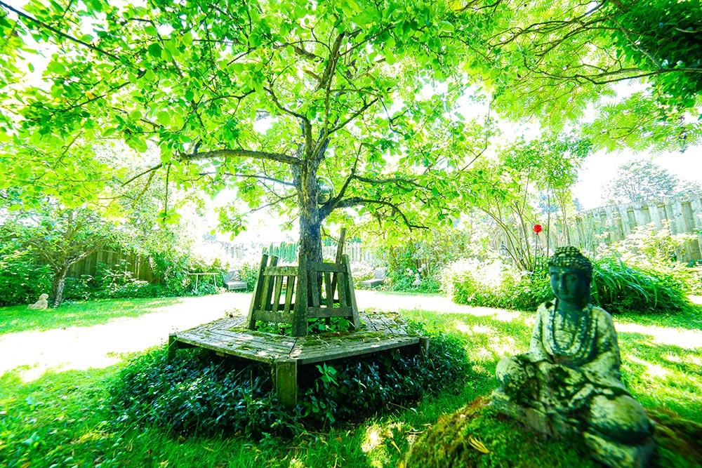 Gästehaus Huss - Buddhastatue mit Baum und Sitzbank