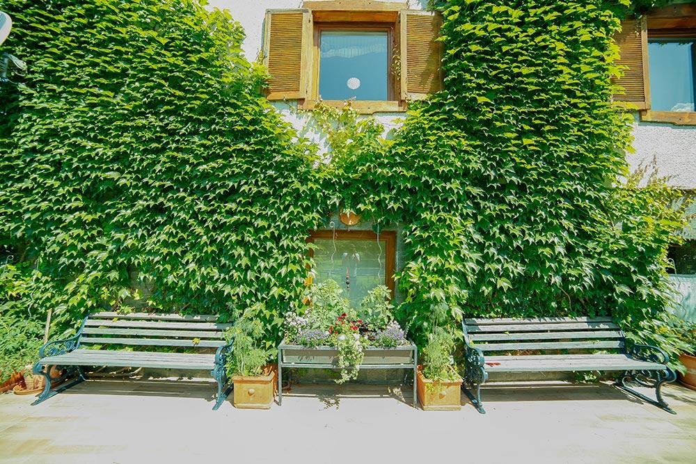 Gästehaus Huss - Grüne bewachsene Fassade mit Sitzgelegenheiten